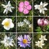 Die Blumen der Rax - Bergblumen - Alpen Flora