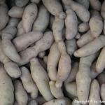 Wirsing (Grünkohl) Kartoffel Curry Suppe - vegetarisch