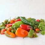 Salat mit gebratenem grünen Spargel und buntem Paprika
