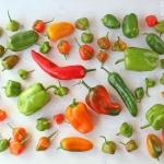 Paprika Feta Salat - vegetarisch