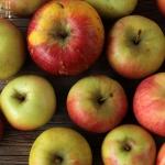 Apfelschichtspeise - vegetarisch