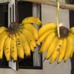 Nektarinen Bananen Lassi  - vegetarisch