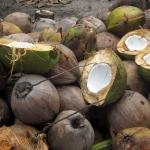 Kokos Ananas Lassi - vegetarisch