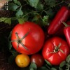 Shahi Paneer - Paneer in Tomatensauce - vegetarisch