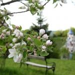 Reisebericht: Rogner Bad Blumau Therme