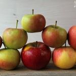 Apfelvollkornpie mit Heidelbeeren - vegetarisch