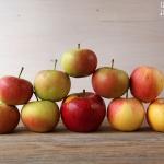 Apfelkompott Biskotten Schichtspeise - vegetarisch