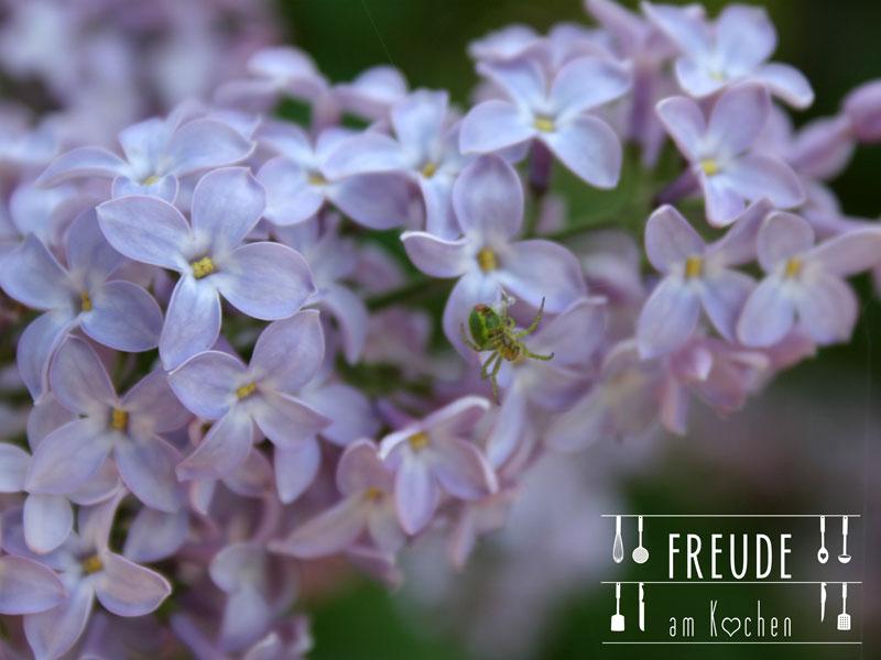 Kleine Wildkräuterkunde plus essbare Wildpflanzen - Flieder - Freude am Kochen