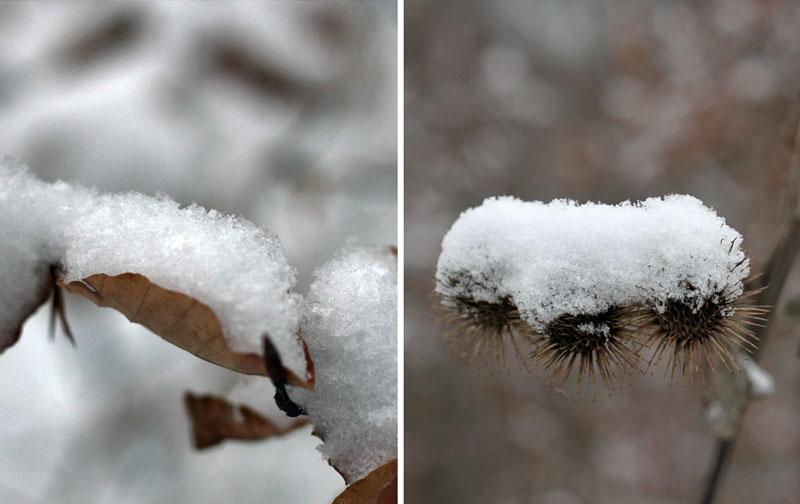 Jänner - Winter - Freude am Kochen