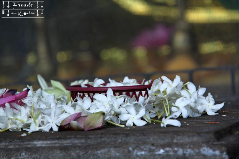 Blüten - Sri Lanka - Freude am Kochen