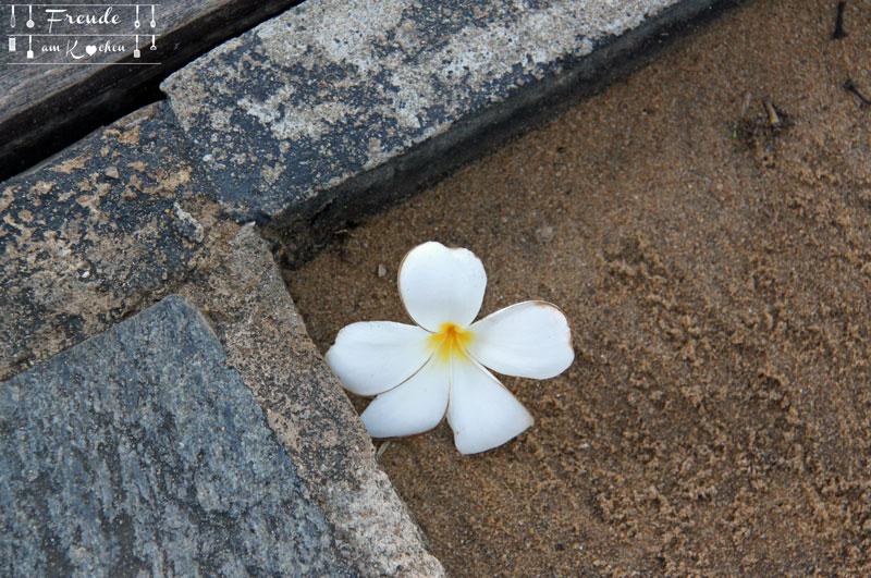 Reisebericht Sri Lanka - Negombo - Freude am Kochen - Frangipani