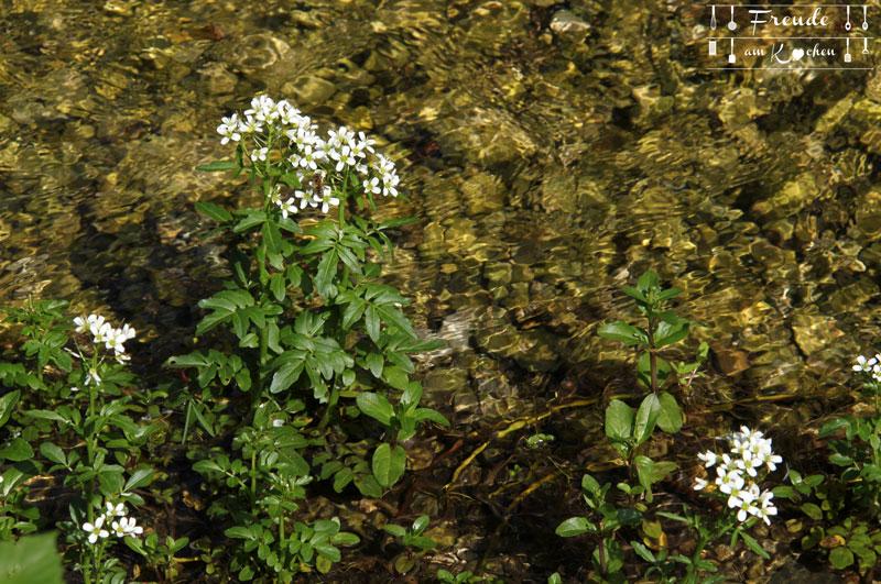 Brunnenkresse - Toplitzsee - Gössl - Ausseer Land - Freude am Kochen - Reisebericht