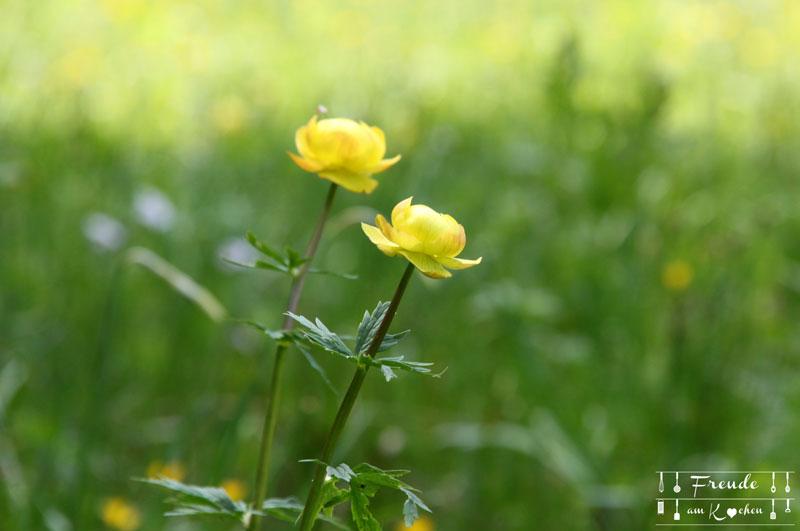 Dotterblume - Toplitzsee - Gössl - Ausseer Land - Freude am Kochen - Reisebericht