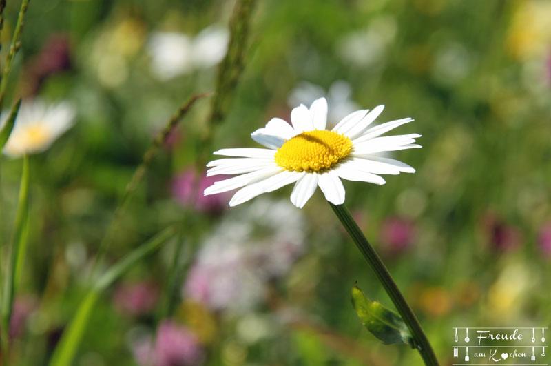 Margariten - Gössl - Grundlsee - Ausseer Land - Freude am Kochen - Reisebericht
