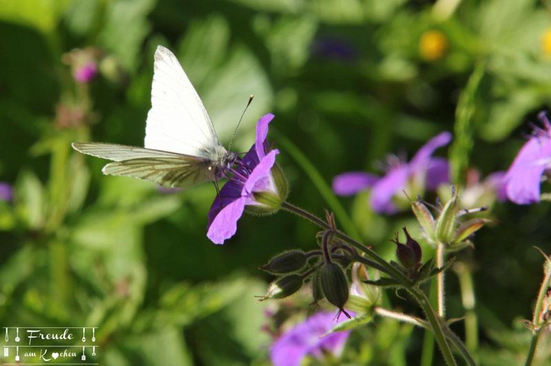Schmetterlinge Storchenschnabel - Toplitzsee - Gössl - Ausseer Land - Freude am Kochen - Reisebericht