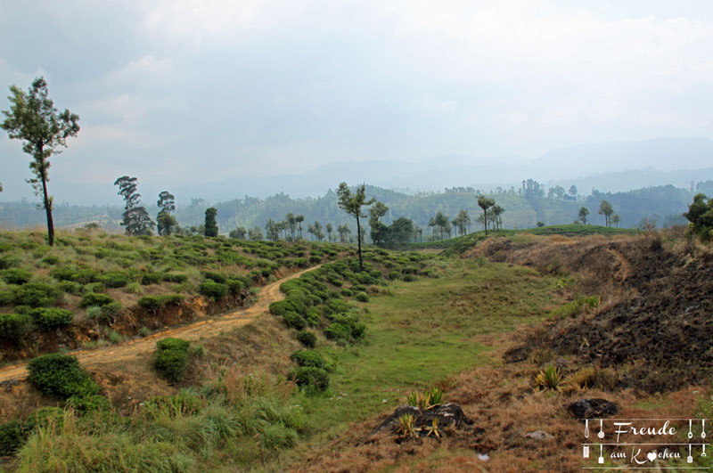 Zugfahrt Hochland - Reisebericht Sri Lanka - Freude am Kochen