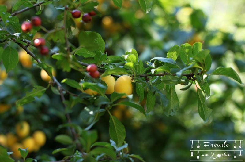 Kriecherl Rezepte - Mirabellen Inspirationen - Freude am Kochen