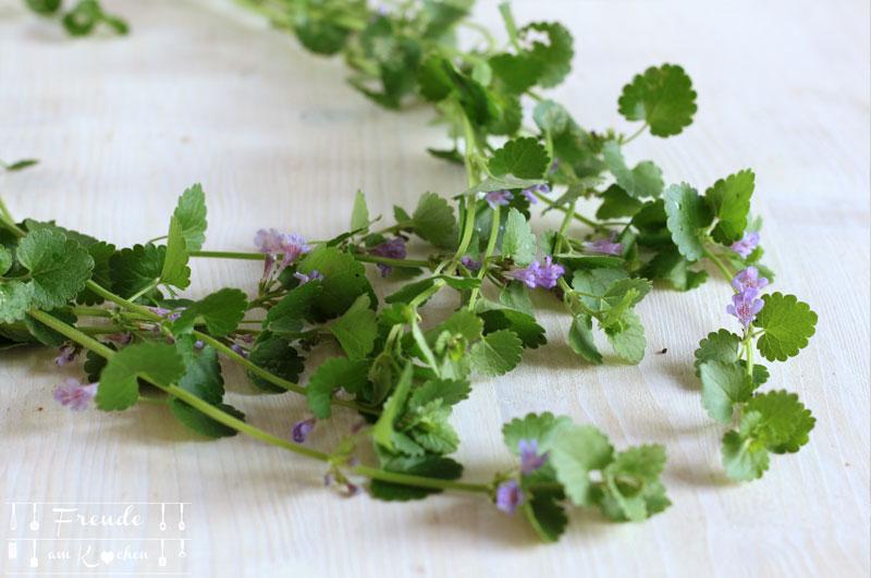 Kleine Wildkräuterkunde plus essbare Wildpflanzen - Gundermann - Freude am Kochen
