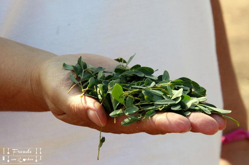 Frischer Moringa vom Moringa Garden auf Teneriffa - Freude am Kochen vegan - Superfood