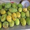 Mango Topfencreme indisch - vegetarisch
