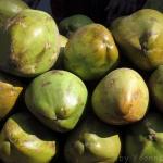 Schlemmen in Indien - Lebensmittel, Süßigkeiten, Früchte & Speisen