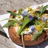 Kleine Wildkräuterkunde plus essbare Wildpflanzen