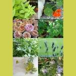 Kleine Gartenkräuter Kunde