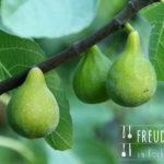 Pfirsich Feigen Konfitüre oder Marmelade