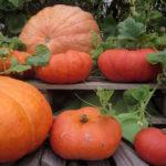Kürbis Tomaten Suppe – vegetarisch