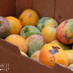 Mango Rhabarber  Marmelade oder Konfitüre