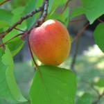 Schneller Becher-Blechkuchen für Obst – vegetarisch