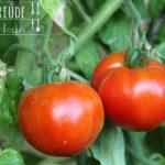 Tomaten überbacken  Pomodori al Forno – vegetarisch