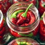 Chilis eingelegt