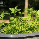 Kürbiskern Pesto – Vegetarisch