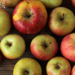 Apfelschichtspeise – vegetarisch