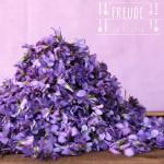 Veilchen – Essbare Blüten – Veilchen-Eiswürfel & Veilchen tiefkühlen