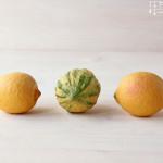 Zitronenlikör – Limoncello