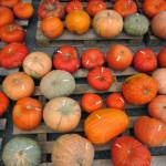Kürbis- und Gemüse Shopping in Niederösterreich & kleine Kürbiskunde
