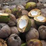 59 Benefits von Kokosöl – Wundermittel Kokosöl – Kokos als Superfood