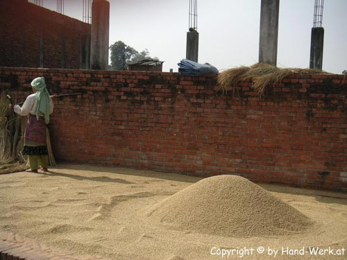 Bhaktapur-Getreidedreschen-