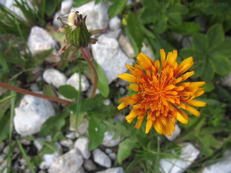 Blumen-Rax-01