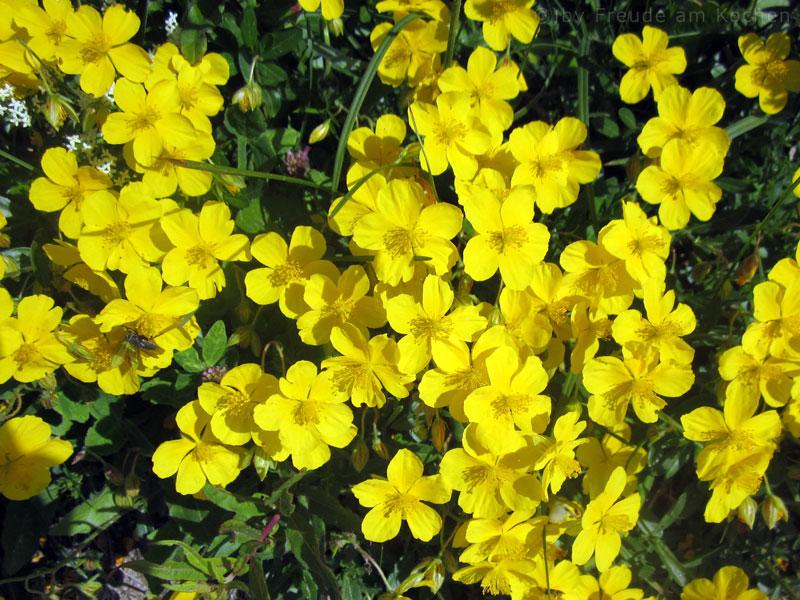 Blumen-Rax-02