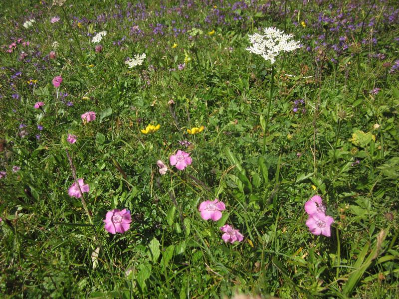 Blumen-Rax-05