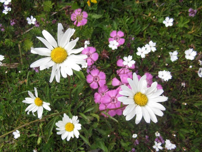 Blumen-Rax-06