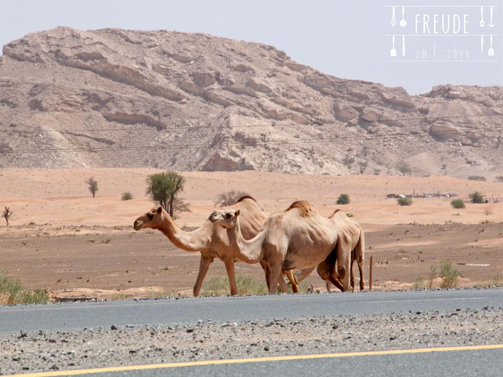 Kamele-01